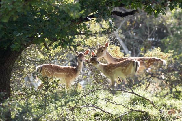 Dreamy deers, Netherlands