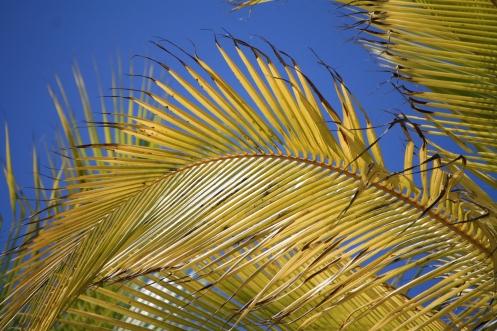 Palm leaves, Zanzibar