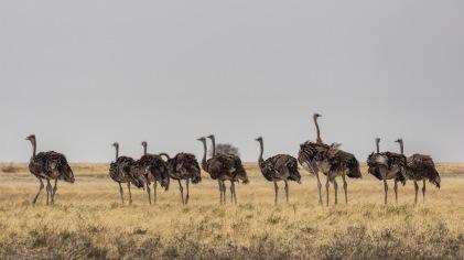 Ostrich clan, Botswana